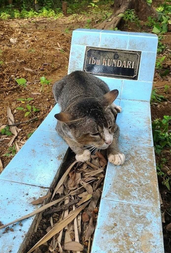 grieving-cat-spends-year-owner-grave-1a-2-1