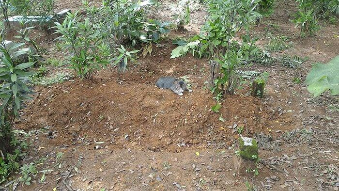 grieving-cat-spends-year-owner-grave-2a-1