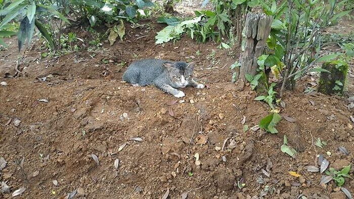 grieving-cat-spends-year-owner-grave-4-1-1